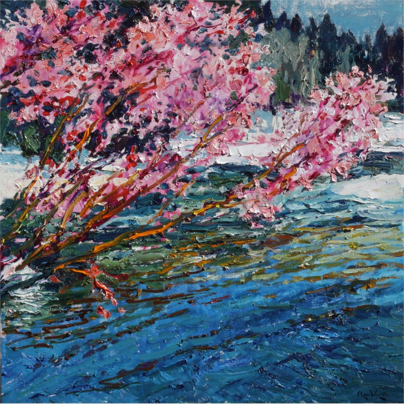 Spring Contrasts - Blossom & Snow by Alan Wolton