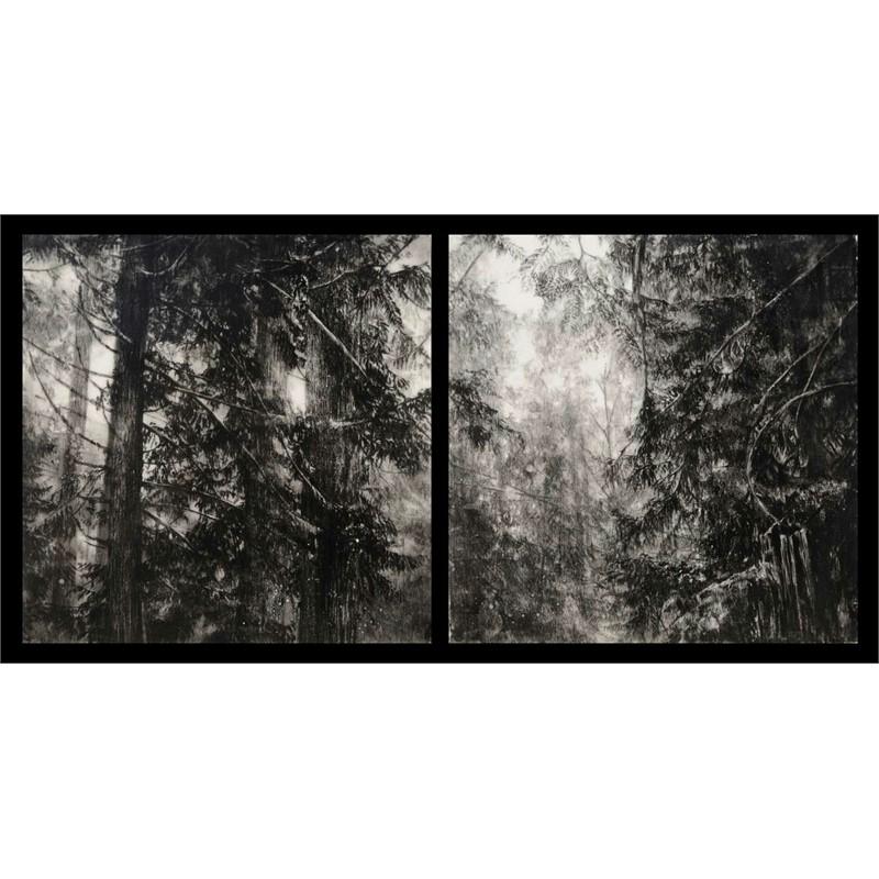 Hypatias Woods II
