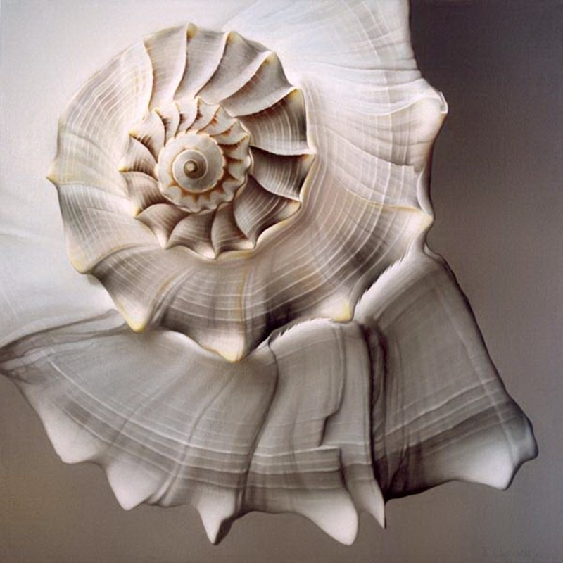 Lightening Whelk (0/95)