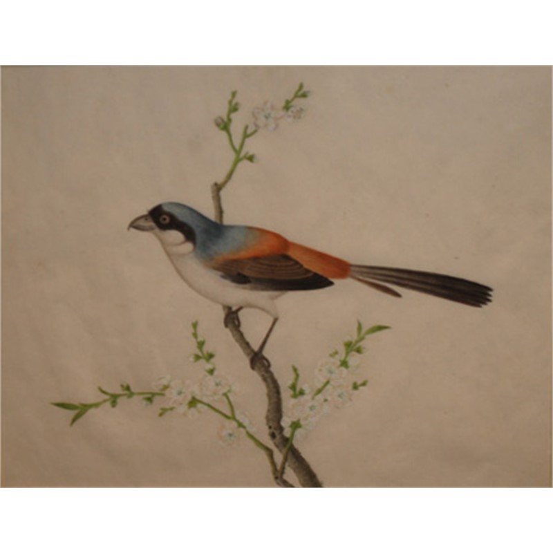 WATERCOLOR OF A BIRD, Chinese, circa 1810