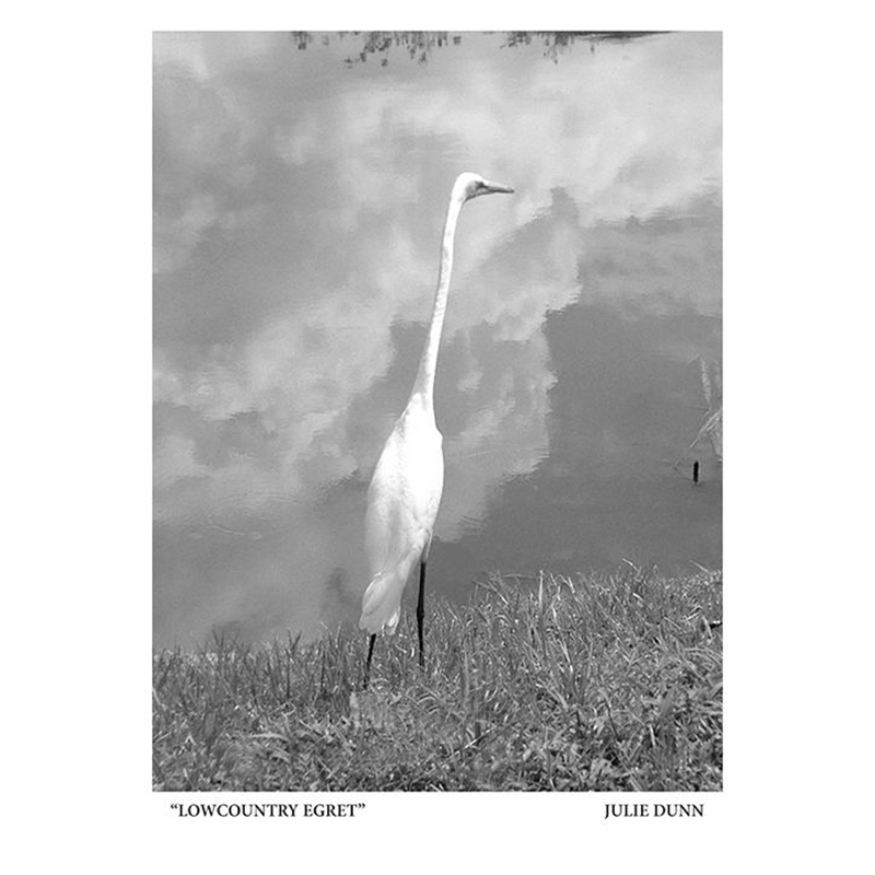 Lowcountry Egret