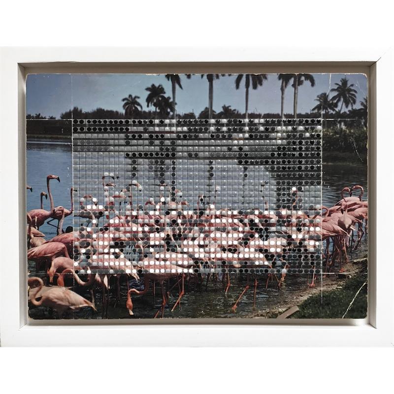 Borrowed Landscapes Study No.151/FL, Florida Flamingos, 2020
