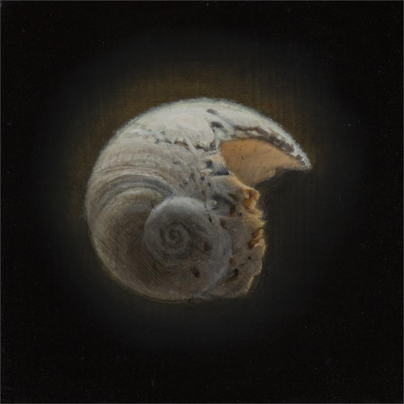 Shell 8