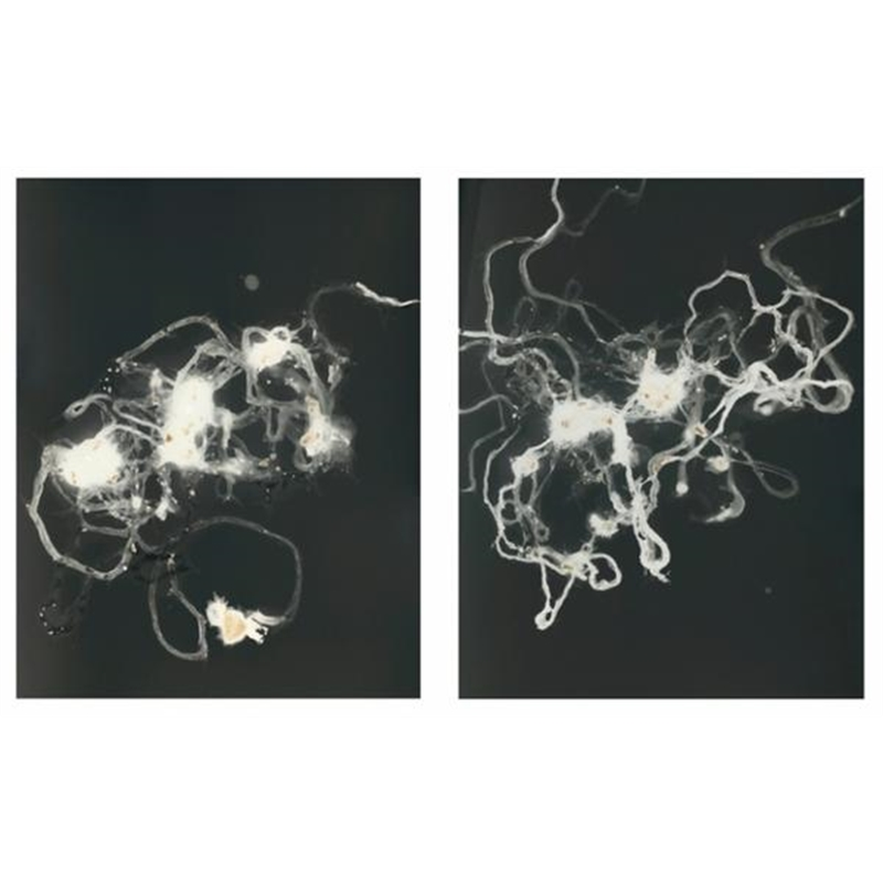 Nebulae XX, 2012