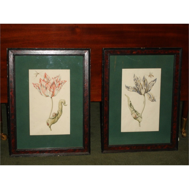 PAIR OF DUTCH TULIP WATERCOLORS, Dutch, 17th century