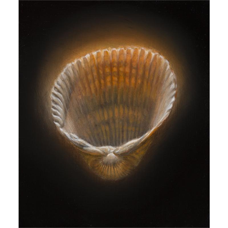 Shell 13
