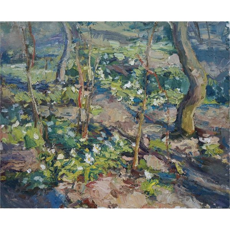 Forest Floor in Spring