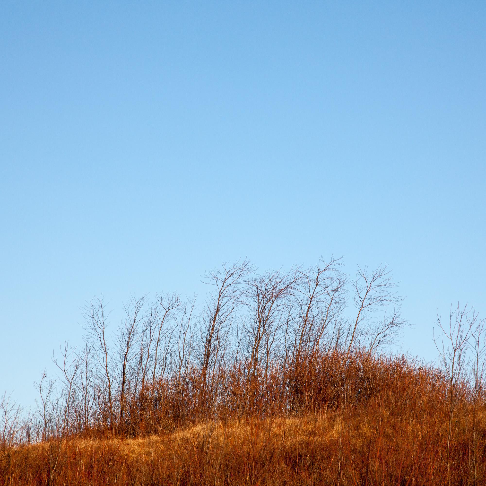 Pre-Liminal II - Beech Hill